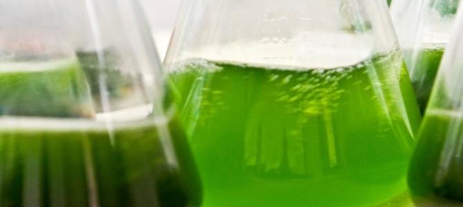 La ruée vers l'or vert de la liqueur noire !