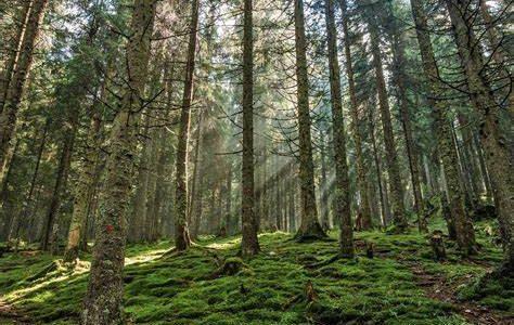Danemark : un téléthon du climat pour un million d'arbres !