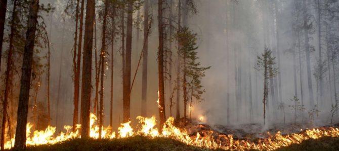 La Suède brûle-t-elle ?