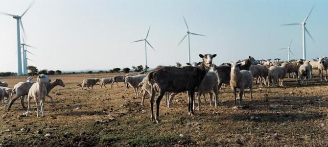 Suède 2025: L'Île de Gotland vise le zéro CO2 !